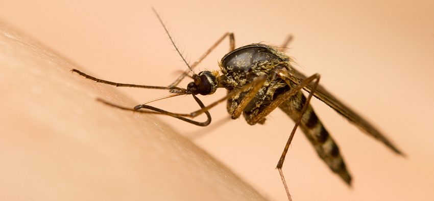 Top 10 Useful Tips to Prevent Dengue & its Symptoms