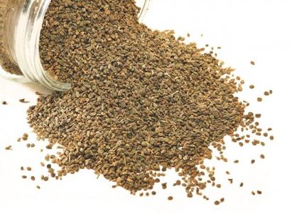 Ajwain, Trachyspermum Ammi