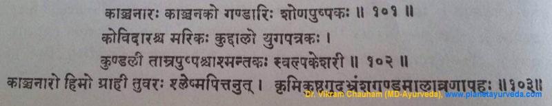 Ancient verse about Bauhinia variegata