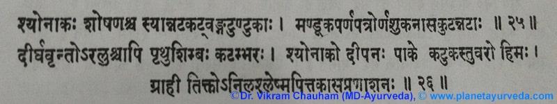 Ancient Verse about <em>Oroxylum Indicum