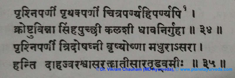 Ancient Verse about Uraria Picta