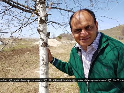 Dr. Vikram Chauhan with Betula utilis (Bhoj Patra) Tree