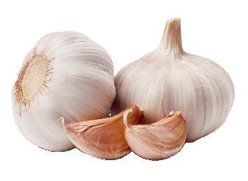 Rasona, Garlic, Allium Sativum