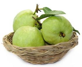 Amrud, Guava, Psidium Guajava