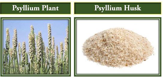 psyllium-plant-husk