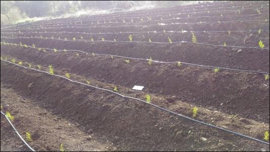 Planet Ayurveda Farms